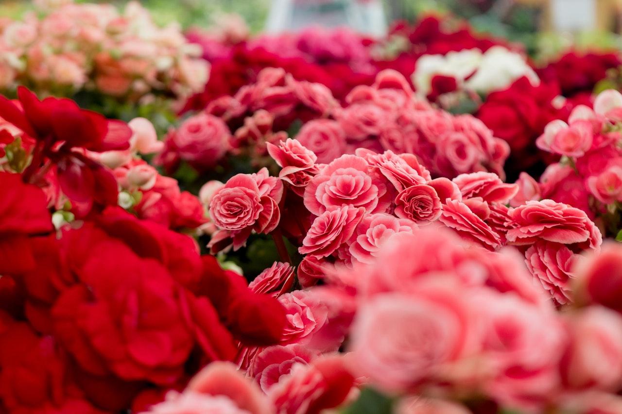 Alege unul din cele mai rapide servicii de livrare flori Bucuresti si ofera-i florile care sa o faca sa zambeasca